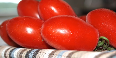 Guten Tomaten sind die Grundlage für leckere Gerichte