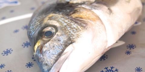 Fischseite richtig filetieren – Die Haut richtig abziehen!