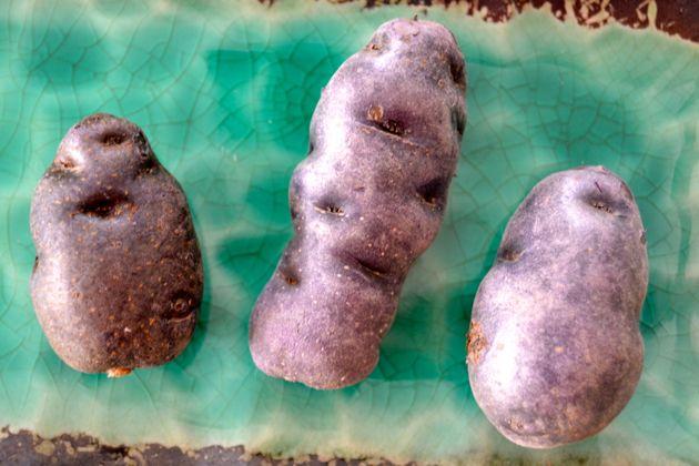 Ganze Vitelotte-Kartoffeln
