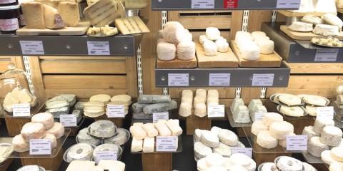 Pecorino und andere leckere Käsesorten im Käseladen - Ein Paradies