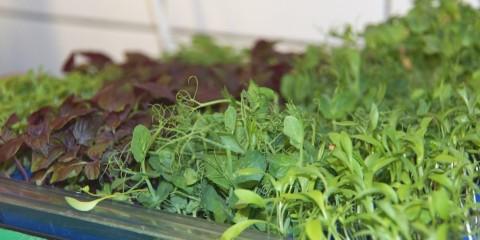 Frankfurter Grüne Sosse - Viele Kräuter notwendig