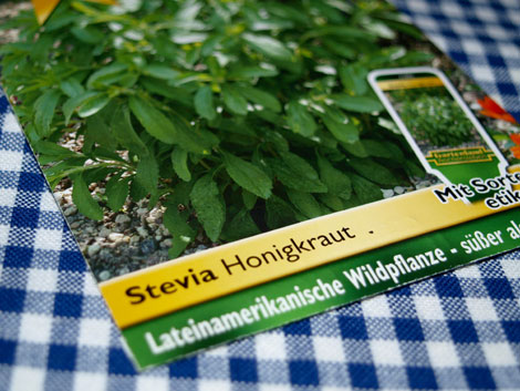 stevia-pflanzen