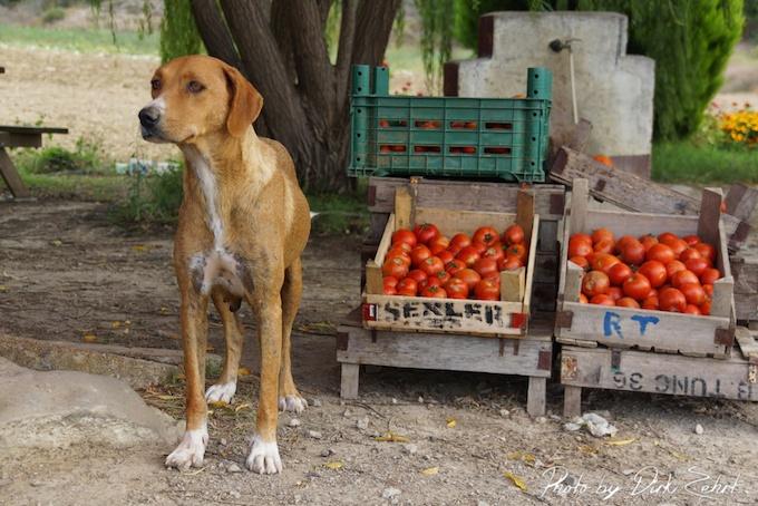 türkische tomaten