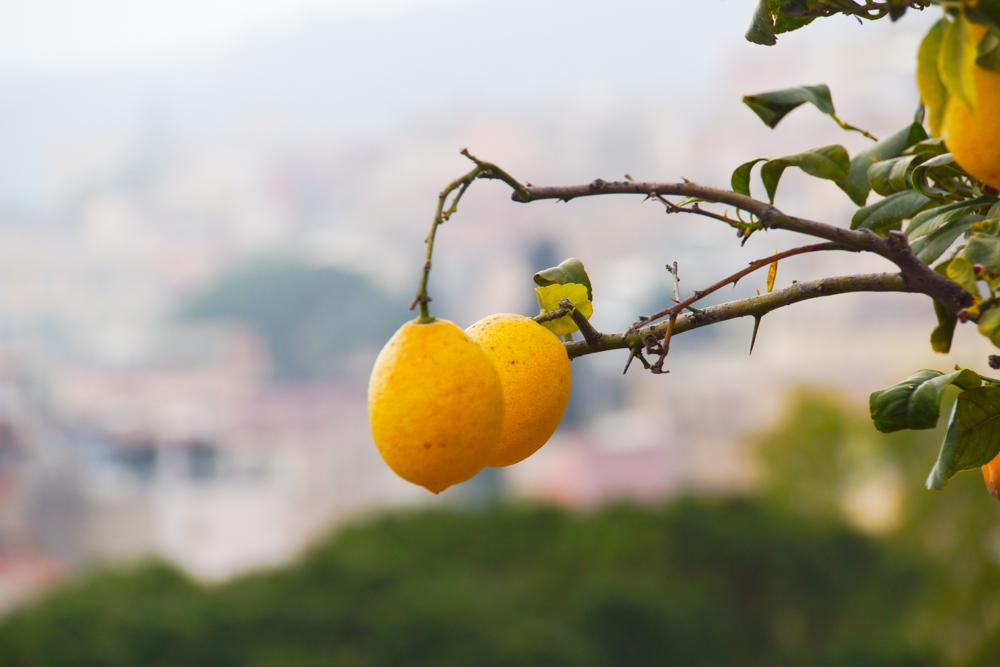 Zitronen auf Lipari