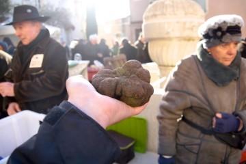 Trüffelmarkt Saint-Paul-Trois-Châteaux - Die größte Trüffel