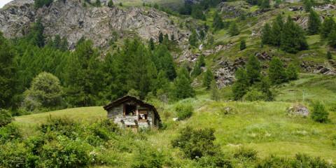 Birkenlehrpfad Bürchen - Schweiz und Wandern passt prima