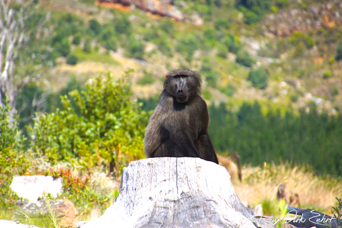 Buitenverwachting - Affen