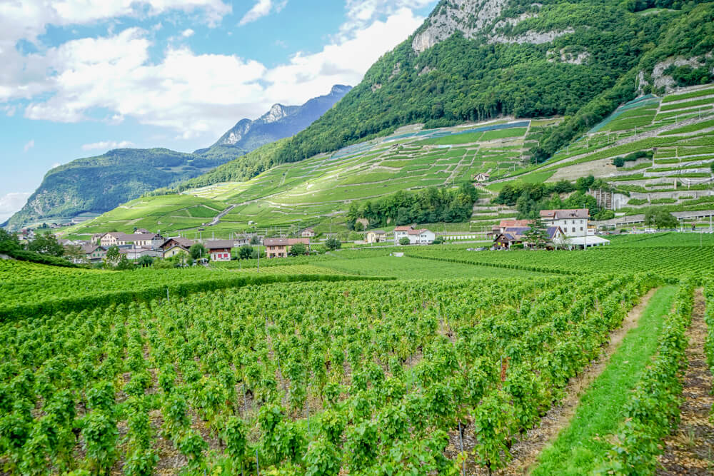 Aigle und sein Weinbau im Kanton Waadt