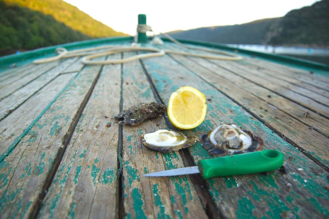 Europäische Austern aus Istrien - so frisch wie sonst nirgends - direkt vom Boot