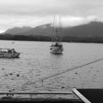 Fischerboote warten bis sie ihre Fracht übergeben können