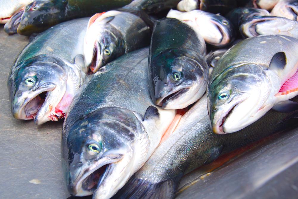 Frischer Lachs aus Alaska - Grandiose Qualität