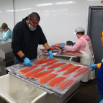 Vakuumierte Filets vom Alaska Lachs