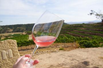 Wein aus Italien - Eine Köstlichkeit
