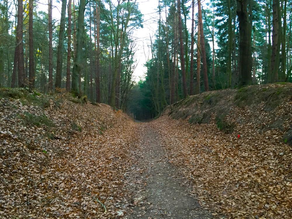 Auch die Wälder auf Usedom können sich sehen lassen