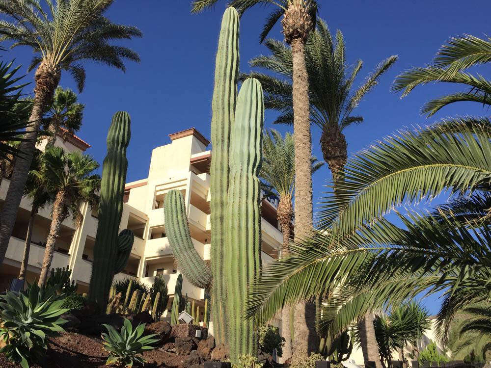 Pico de la Zarza Rundweg - Am bezaubernden Garten des Barcello Hotels vorbei