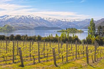 Weinanbau in Neuseeland