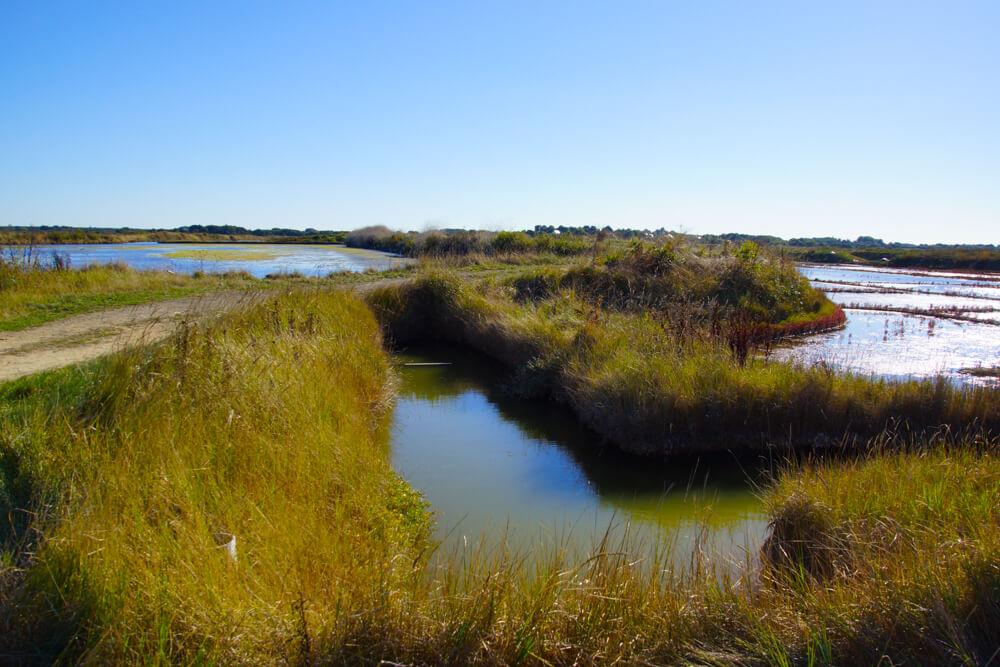 Fleur de Sel de Guérande - Die Verteilung des Wassers in den Salzbecken