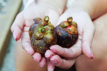 Frische Mangosteen - Gesunde Früchte