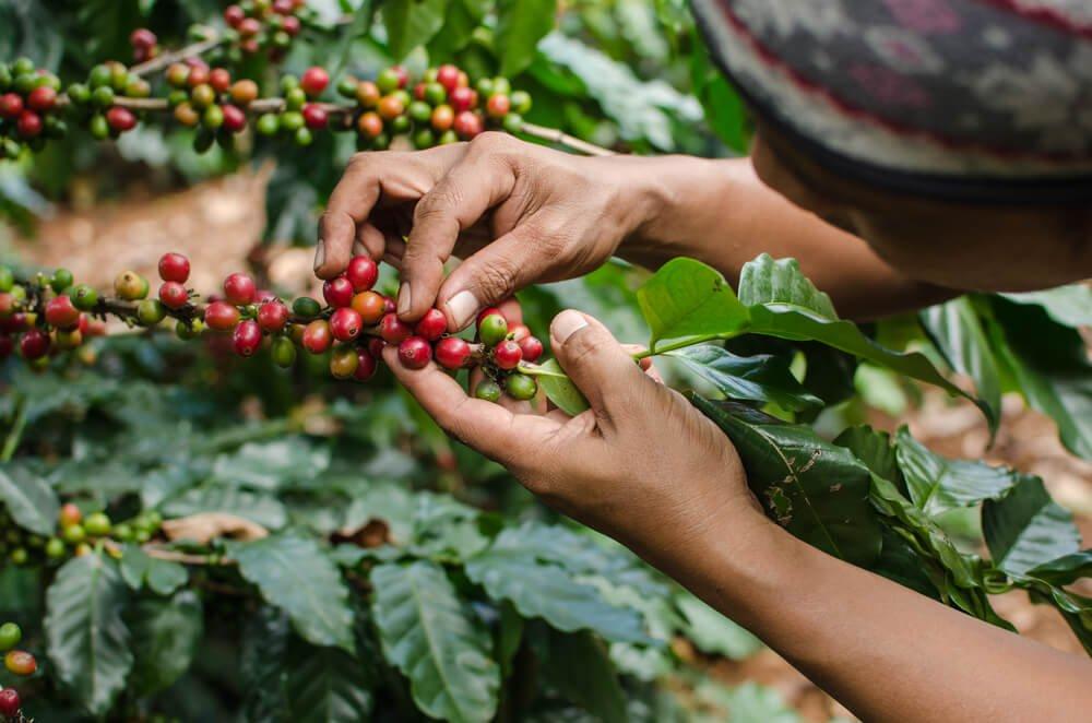 Kaffeebohnen - Immer wieder schön anzuschauen
