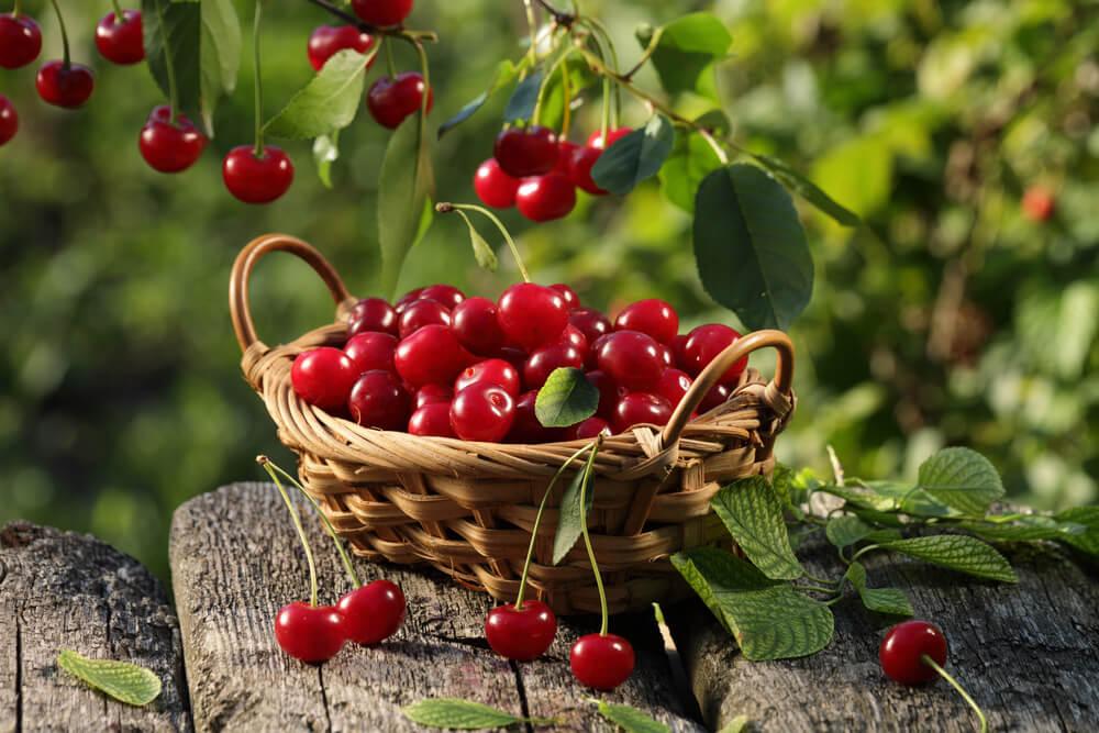 Kirschen aus dem Piemont
