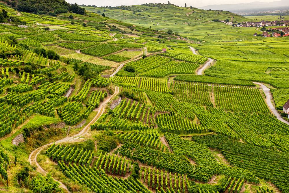 Die Weinregion Elsass