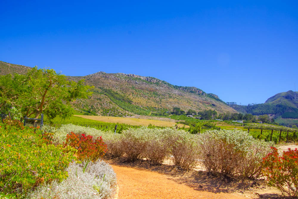 Steenberg Wine Estate Constantia Valley - Die Farm