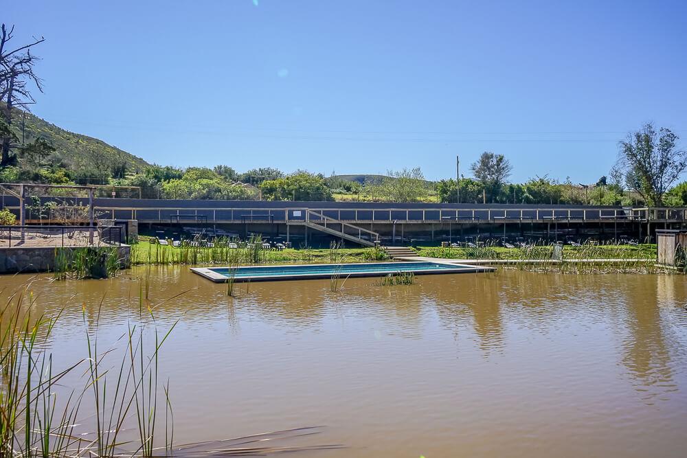 Botlierskop Game Reserve & Villas - Pool und Natursee