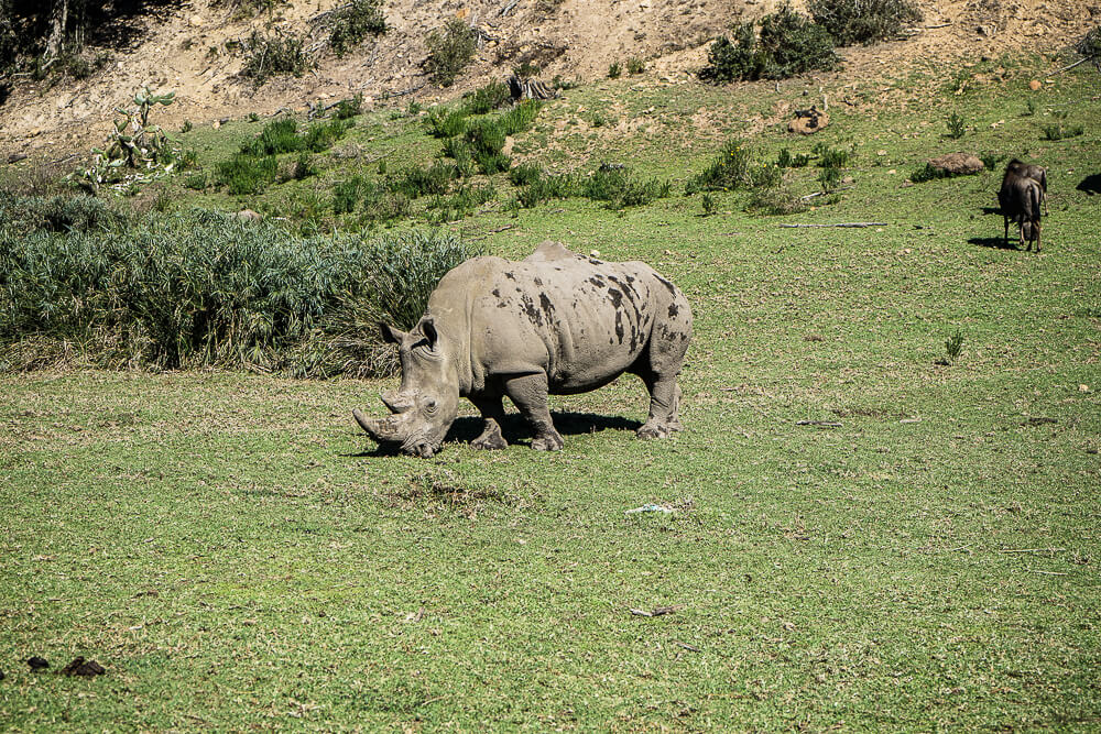 Botlierskop Game Reserve & Villas - Rhino im Park