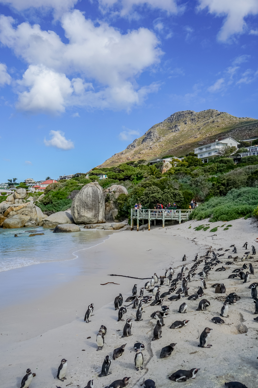 Boulders Beach Pinguine - Pinguine und Strand