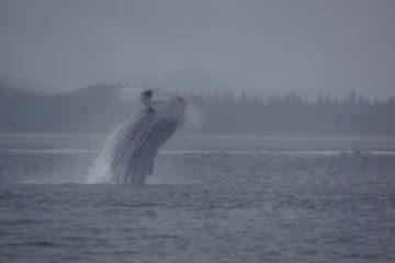 Juneau, Alaska - Whale Watching Tours - Atemberaubend schön
