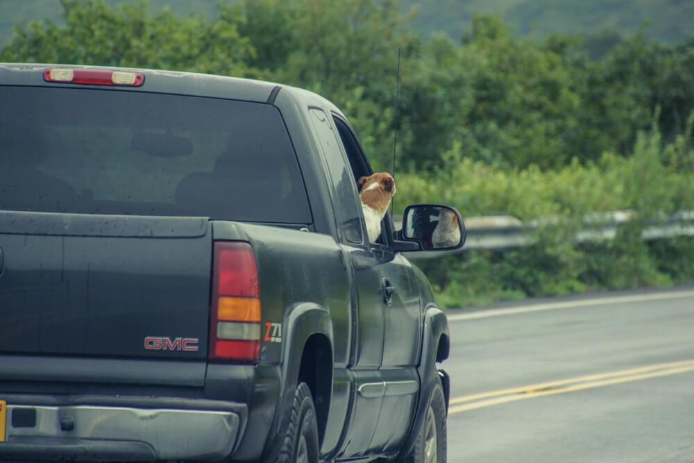 Kodiak, Alaska USA - Hund im Pickup