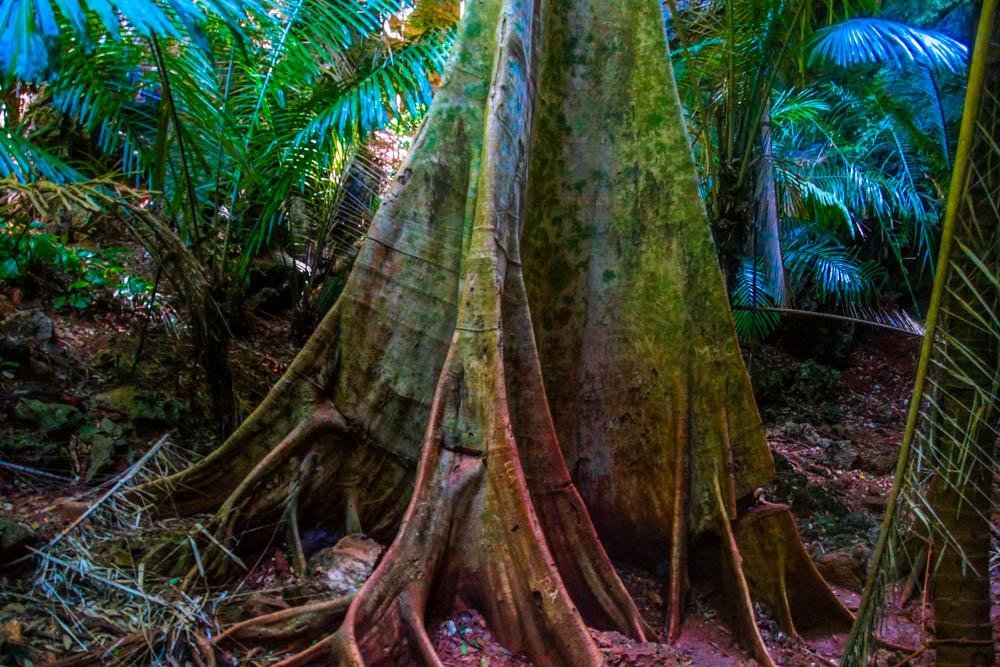 Railay Beach Lagoon - Riesige Bäume und intakte Natur