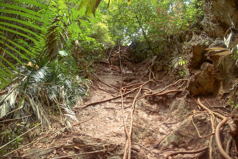 Railay Beach Lagoon - Wurzeln und Kletterseil