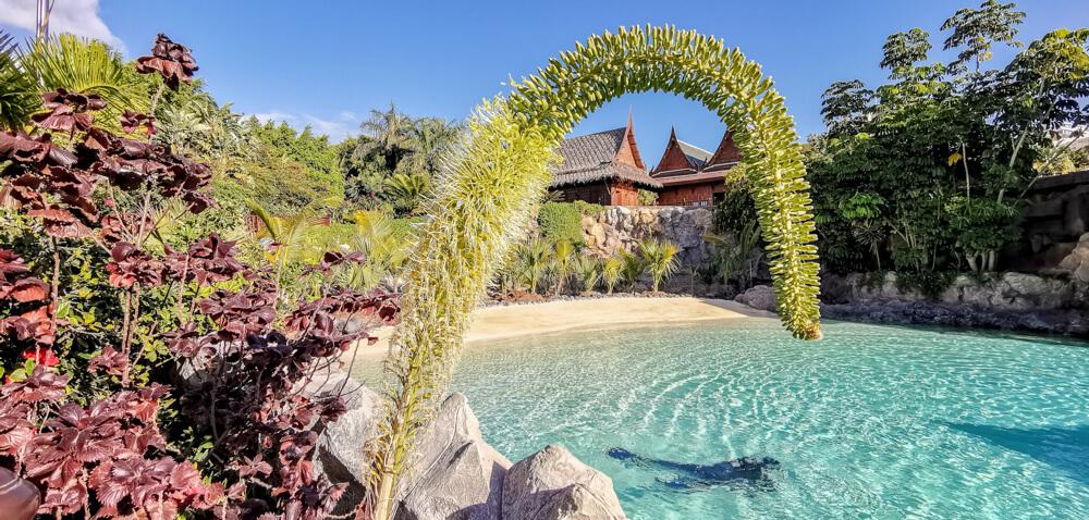 Siam Park, Teneriffa - Pool mit Robben