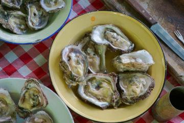 Wild Oats Community Farmers' Market - göttliche Austern