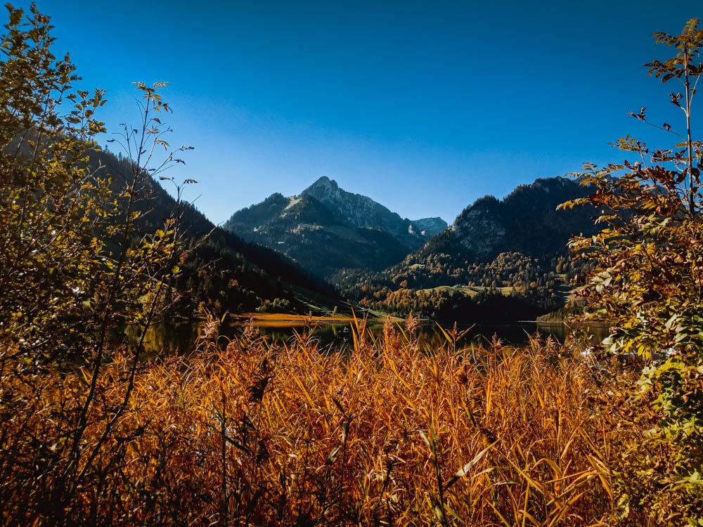 Schwarzsee im Herbstschilf