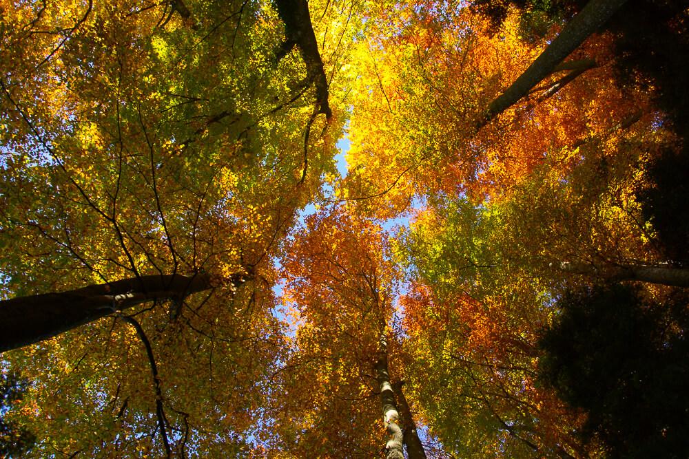Bürgenstock Hotel - Mein Besuch mit Herbstlaub