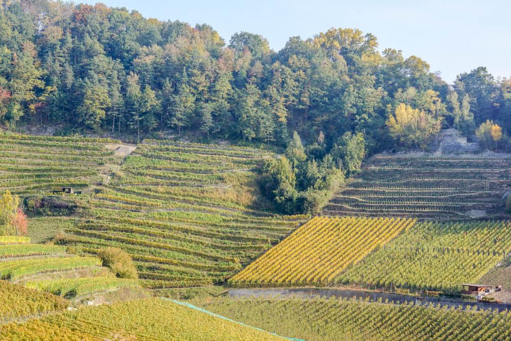 Die Vully Weinberge in der Region Fribourg