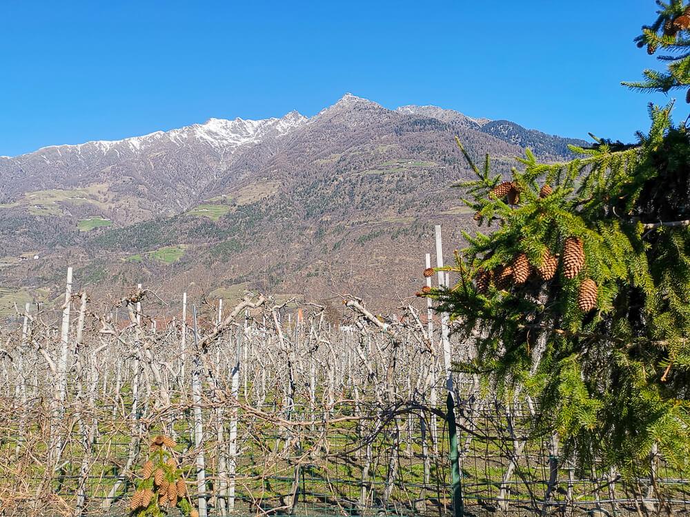 Speck aus Südtirol - Wundervolle Landschaft mit Apfelplantagen