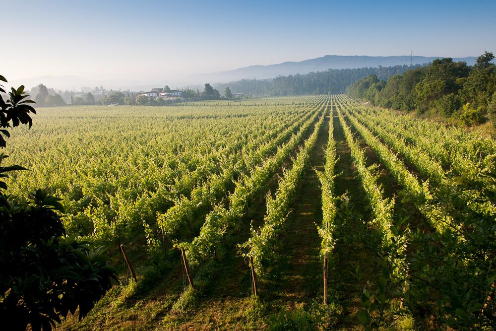 Vinho Verde Region in Portugal 3