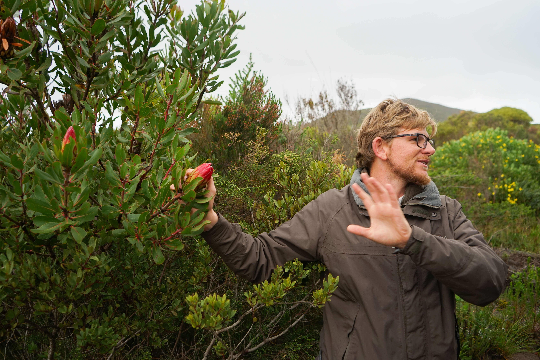 Grootbos Private Nature Reserve - Fynbos Pflanzen und Ranger