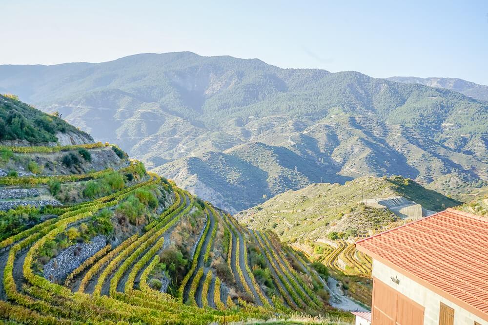 Tsiakkas Weingut Zypern - Wein in Terrassenform angebaut