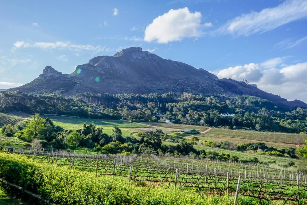 Constantia Glen Weingut, Südafrika - Weinreben und Berge