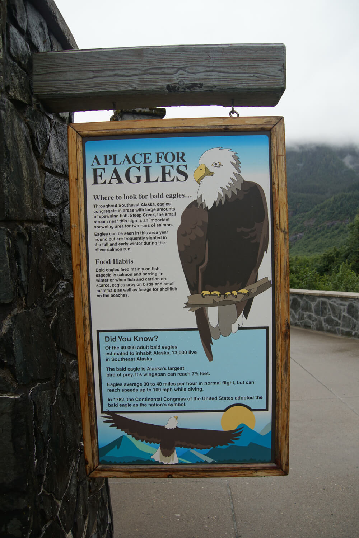 Mendenhall-Gletscher - American Eagles