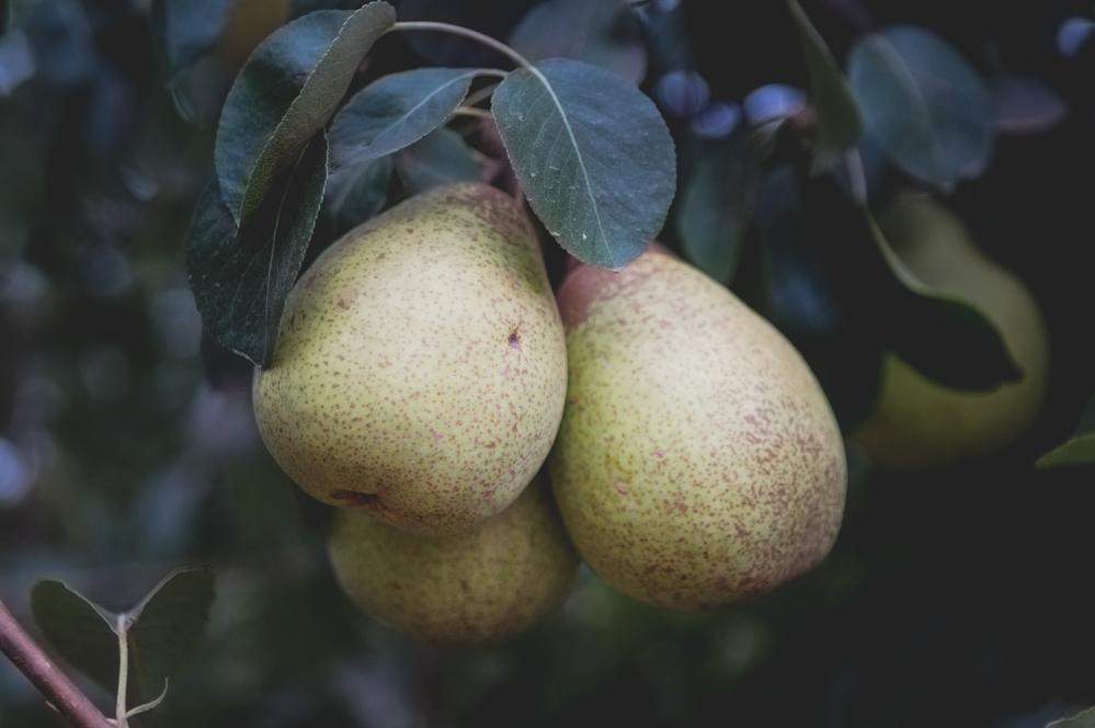 Birnen aus Portugal fürs Rezept